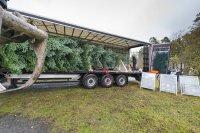 Wie kommt der Weihnachtsbaum sicher nach Hause?