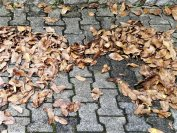 Der Herbst hält besondere Herausforderungen bereit